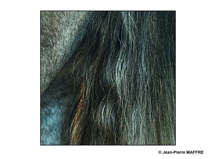 Le cheval est une oeuvre d'art par lui-même, de loin comme de très près.