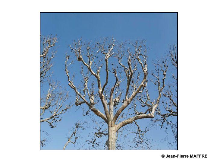 Le ciel est bleu, profitons en pour contempler les formes épurées que nous offrent les branches des arbres qui ont perdu leurs feuilles.