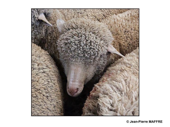 Dans notre vie trépidante il faut savoir nous arrêter un instant pour contempler tous ces animaux.