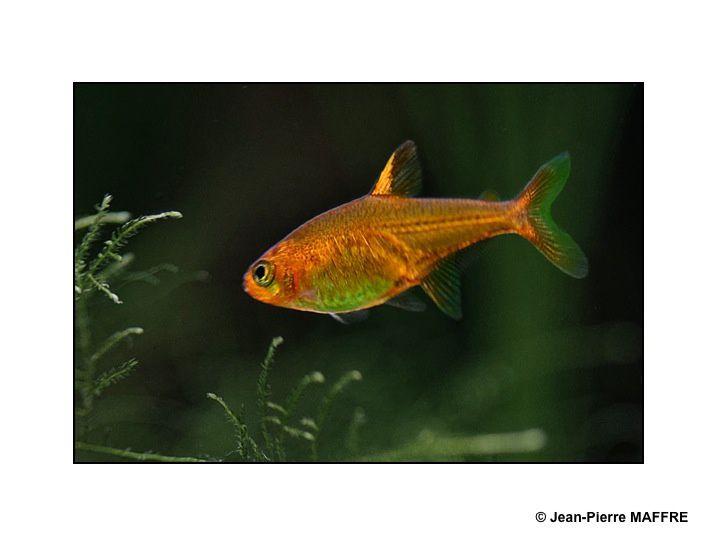 Pour transformer son écran d'ordinateur en aquarium il suffit de photographier les poissons des aquariums de la Porte dorée et du Trocadéro à Paris.