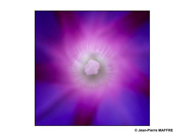 Qui croit vraiment qu'il n'y a qu'un seul soleil ? Eh bien, non ! On peut en trouver une multitude de toutes les couleurs dans la nature.