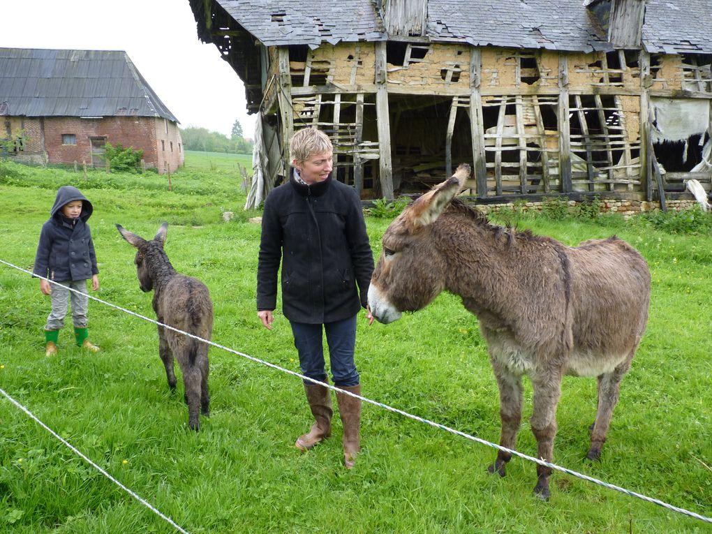 Giverny - les ânes Ernestine et Ernest  -  Dieppe - Vide grenier en avril