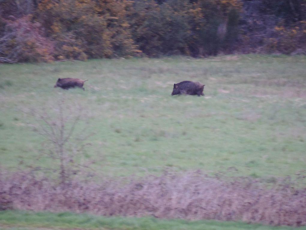 animaux sauvages visibles depuis ma fenêtre