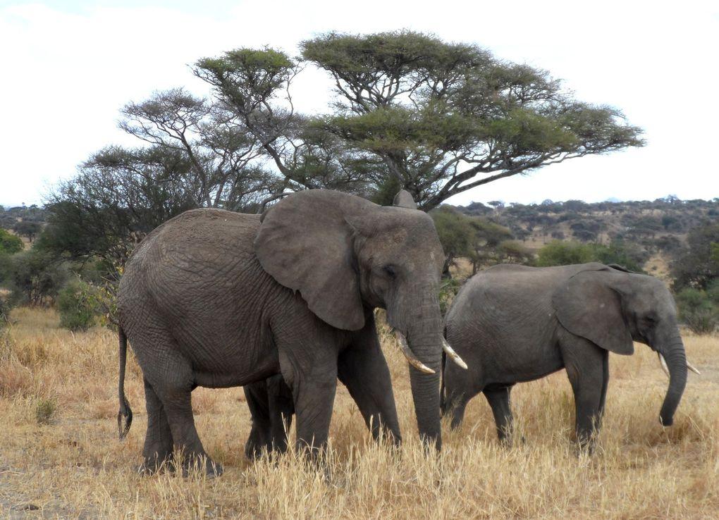 Le safari : Babar, Simba &amp&#x3B; tous les autres
