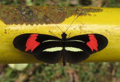 beaucoup de papillons, en général sur les mains courantes des passerelles.