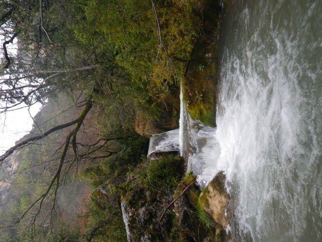 Le ruisseaux et les truites de l'après-midi.