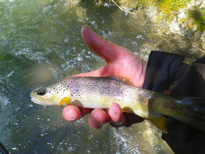 Deux jours de pêche pendant le week-end du 8 mai.