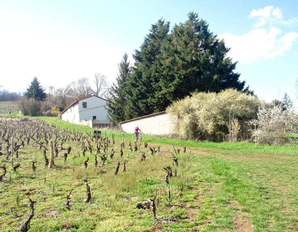 VTT Entre Vignes et Pierres Dorées avec le BSC St Germain-Nuelles
