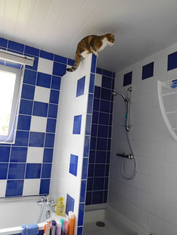 La saga des chats