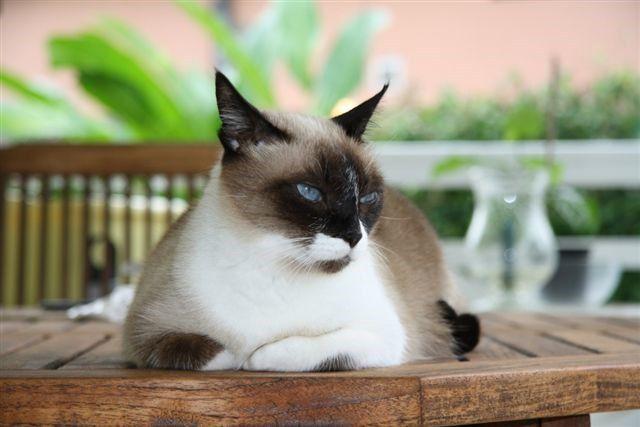"""Cajou avec son pote Peter et sa soeur chat Morgane qui va bientôt nous dire si Cajou est """"adoptée"""" !!"""