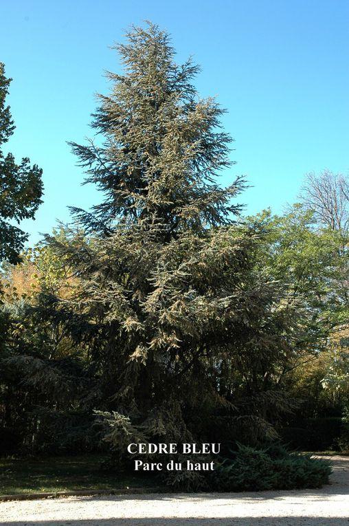 Les Cèdres, arbres rois de la Résidence