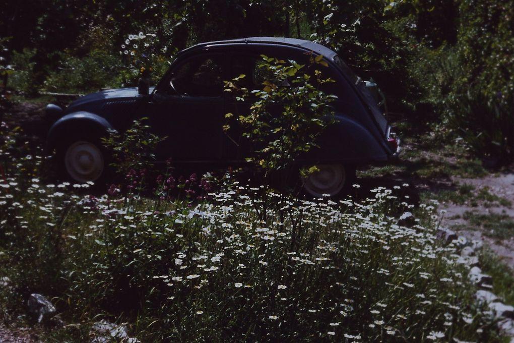 RIGADINE dans le jardin de Fernande