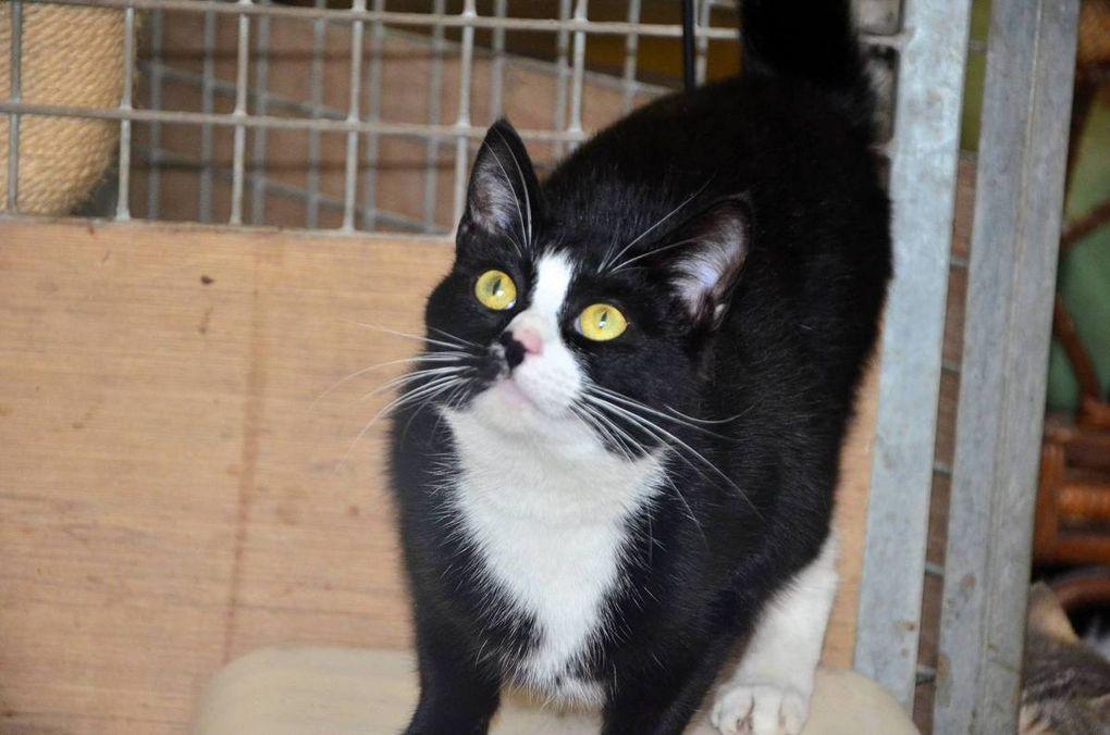 ADOPTEE !!! Douillette : jolie jeune chatte noir et blanc