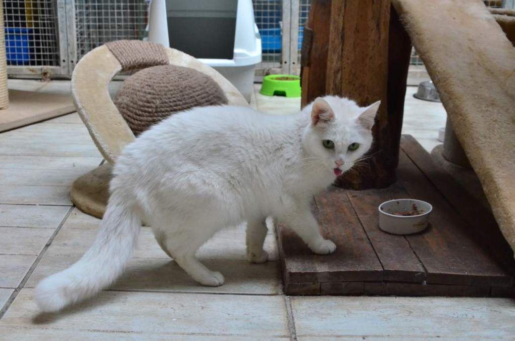 Elle est adoptée : LUNA - chatte blanche et sourde de 6 ans