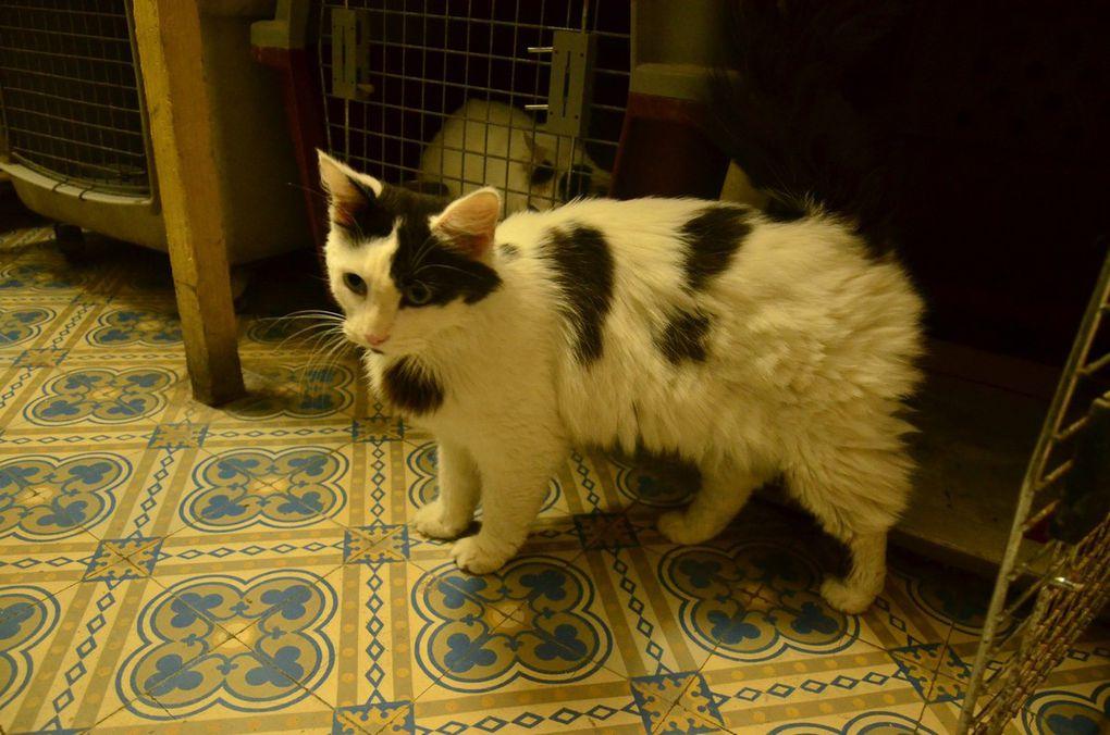 A adopter : PICASSO, gentil mâle castré à poil mi-long de 2 ans