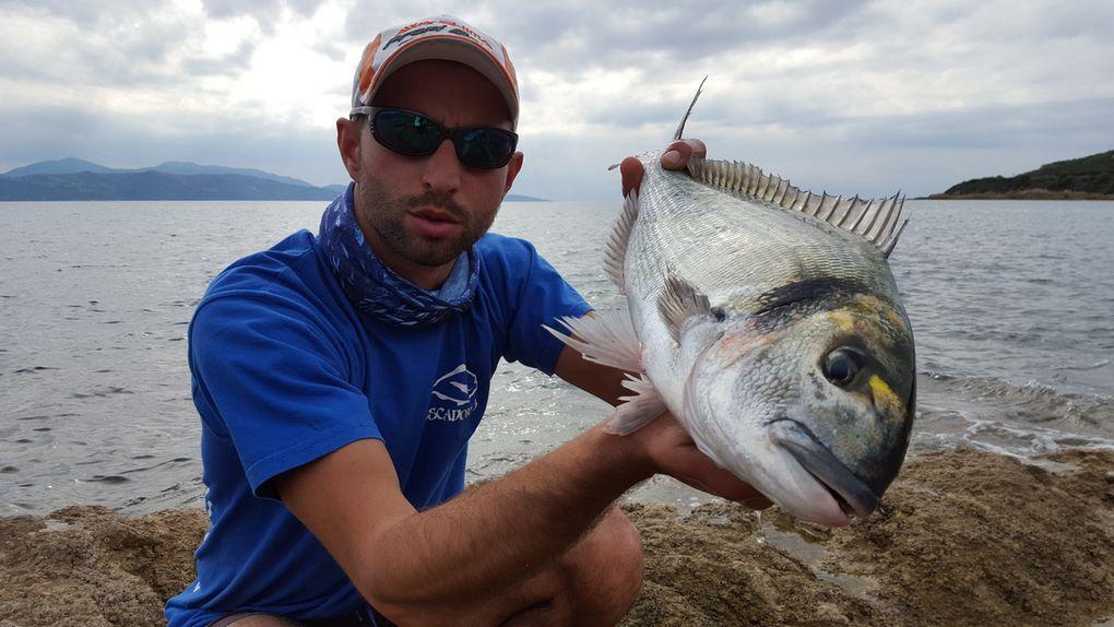 Résultat de la première journée le denti repartira à l'eau et la daurade fera un bon repas de pêcheurs...