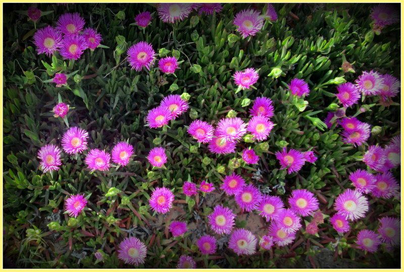 &quot&#x3B; Fleurs du Portugal  &quot&#x3B;