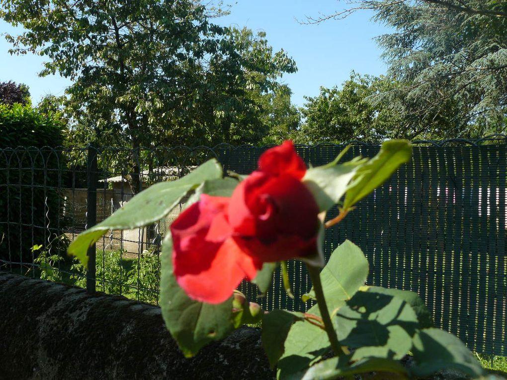 des petites paquerettes, de minuscules fleurs roses, des abeilles qui butinent, des roses éclosent et en boutons, un jeunes hortensia en fleurs et aussi des fleurs d'églantiers buttinées par des petites abeilles... c'eest ce que je trouve chez moi !!!