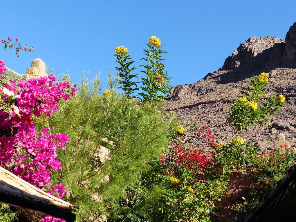 Maroc 2015 : oasis,  kasbah et palmeraies...