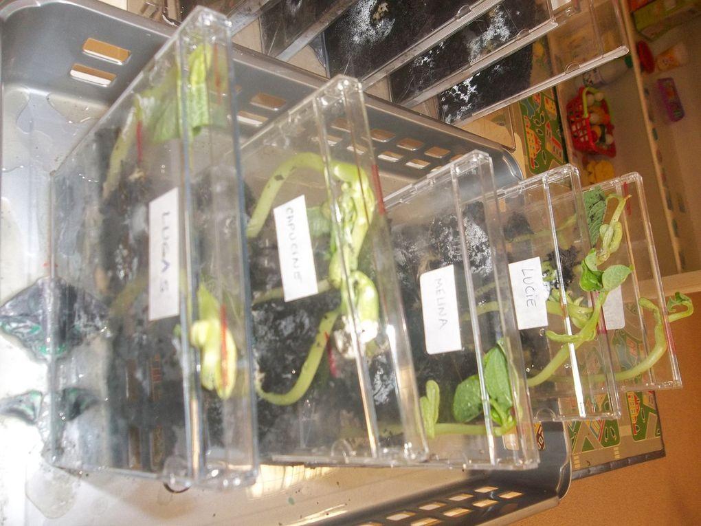Les étapes de la germination dans les boîtiers de CD