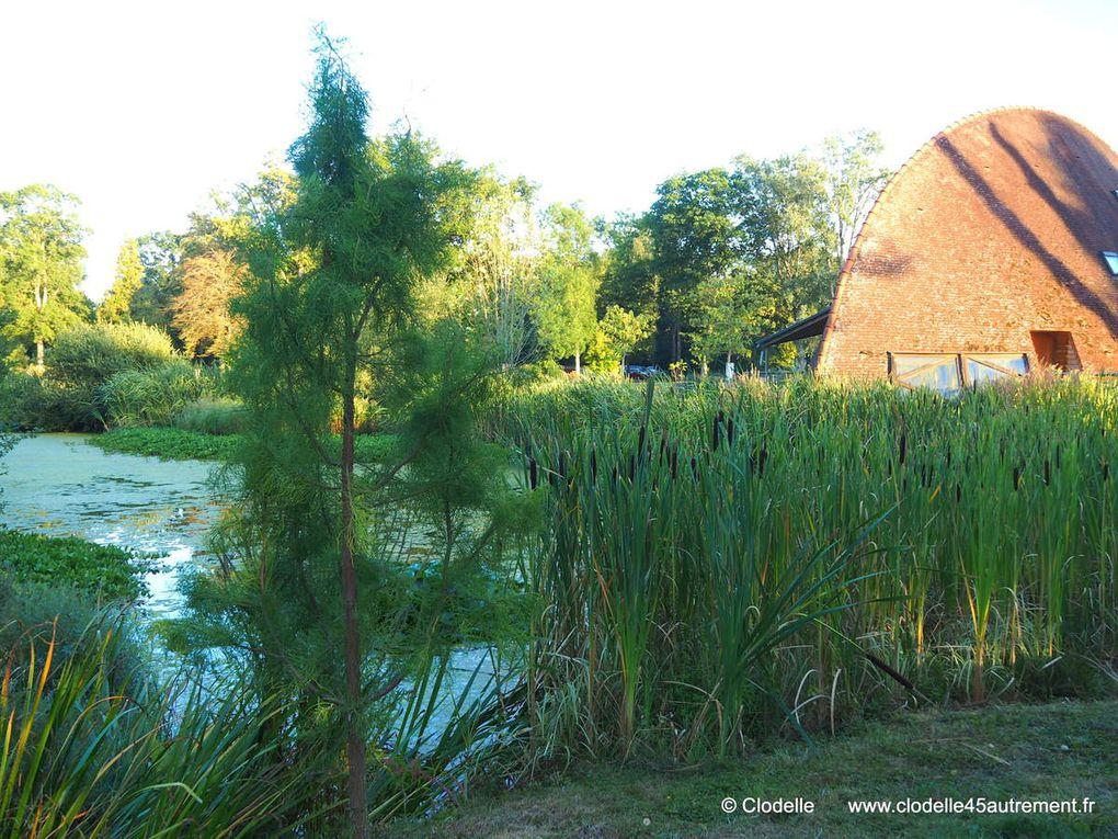 PHOTOS DE L'ARBORETUM DES BARRES offrant chaque été de magiques GRANDES NUITS à Nogent-sur-Vernisson