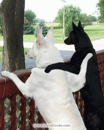 Drôles de chiens
