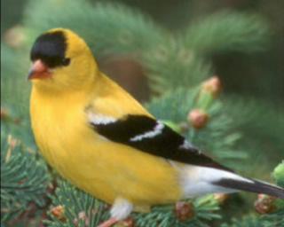 La faune : Oiseaux