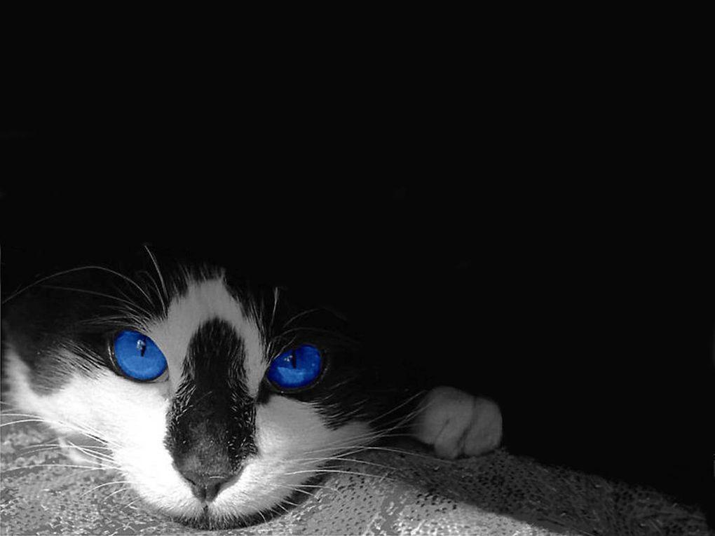 La faune : Les chats