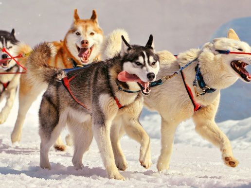 La faune : Les chiens