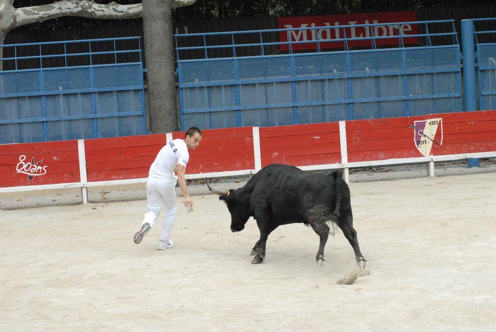 Course de jeunes taureaux