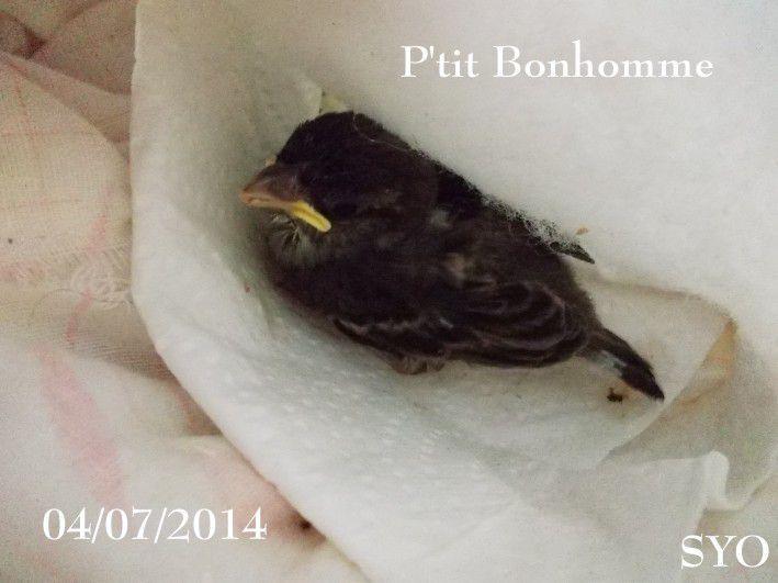 Les nouveaux Petits Potins de la semaine : le Petit Oiseau