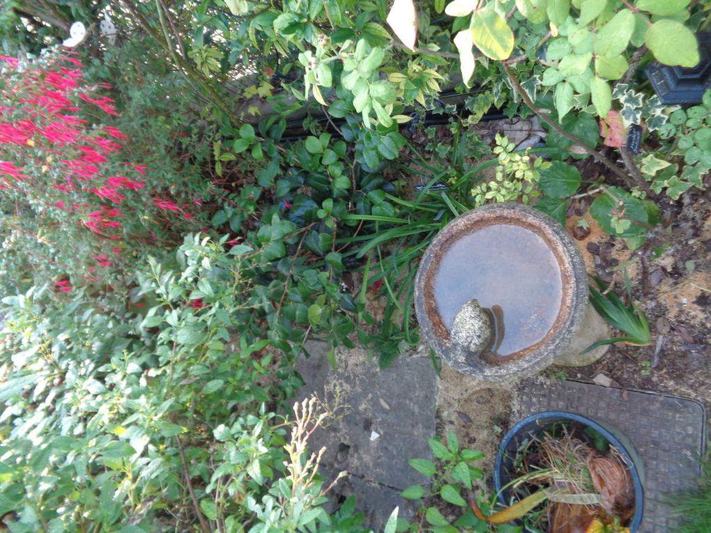 Photo de mon jardin prises en octobre .....