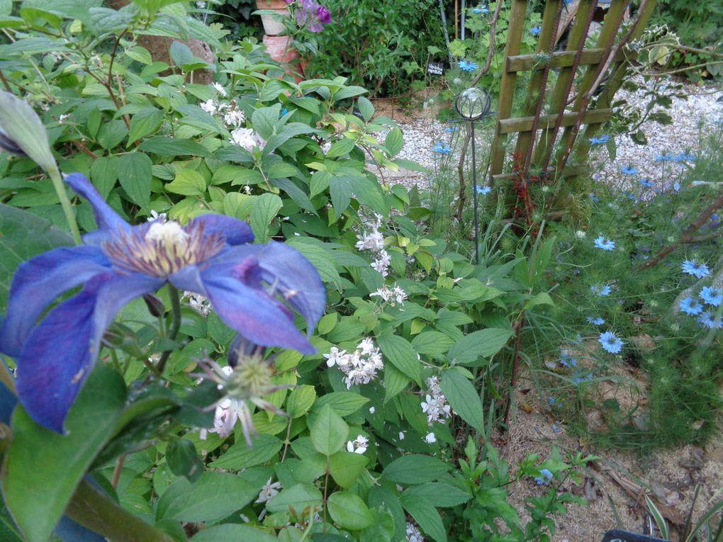 Mon album photo de juillet avec les fleurs de mon jardin .....
