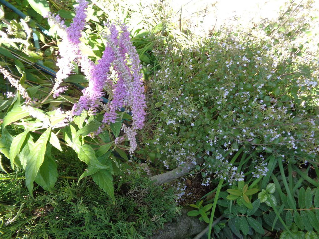 Mon jardin Le Clos fleuri en octobre