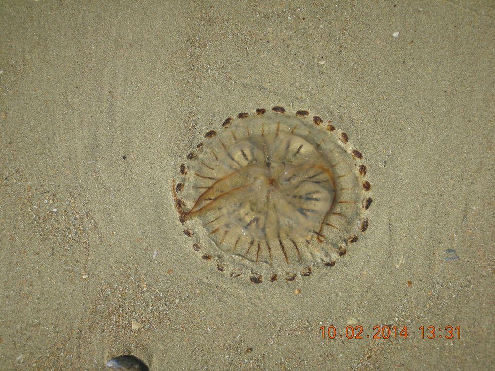 et pleins de méduses échoué sur la plage !!! pauvre bêtes !!