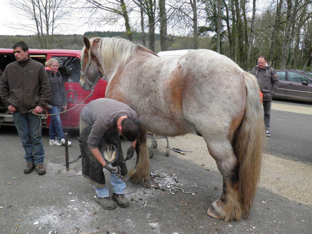 Fête de la Saint-Thuribe 2016, les chevaux, démonstration de maniabilité et de ferrage.