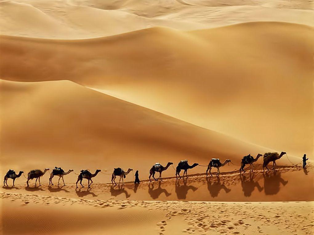 MSC Crociere e la vacanza da sogno negli Emirati