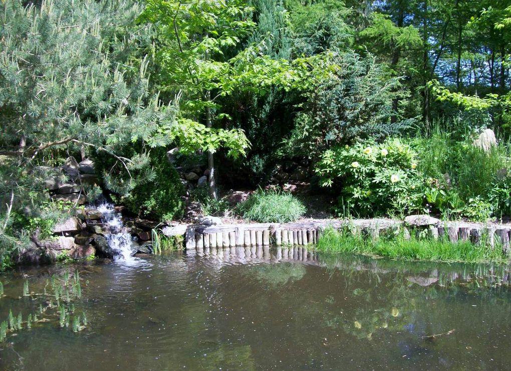 Im Rhododendron-Garten von Gramzow