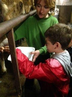 De la traite des chèvres...