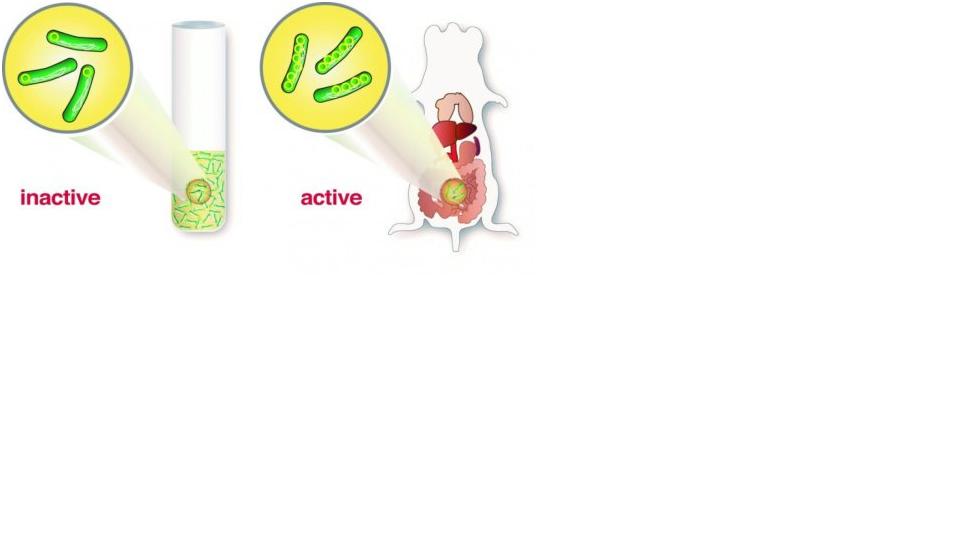 a) I plasmidi nei batteri Yersinia - b) Il meccanidmo di diffusione in Yersinia