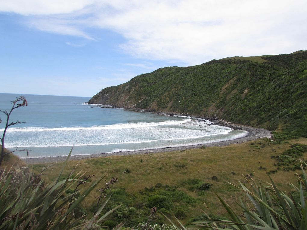 The Catlins, excavations profondes.