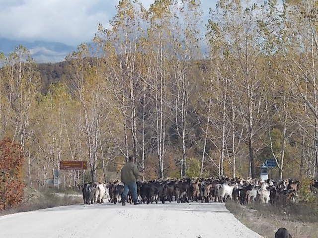 996 chèvres. Pour la lavogne j 'étais resté en mode macro.....balade en fin de journée autour du lac de Ioannina