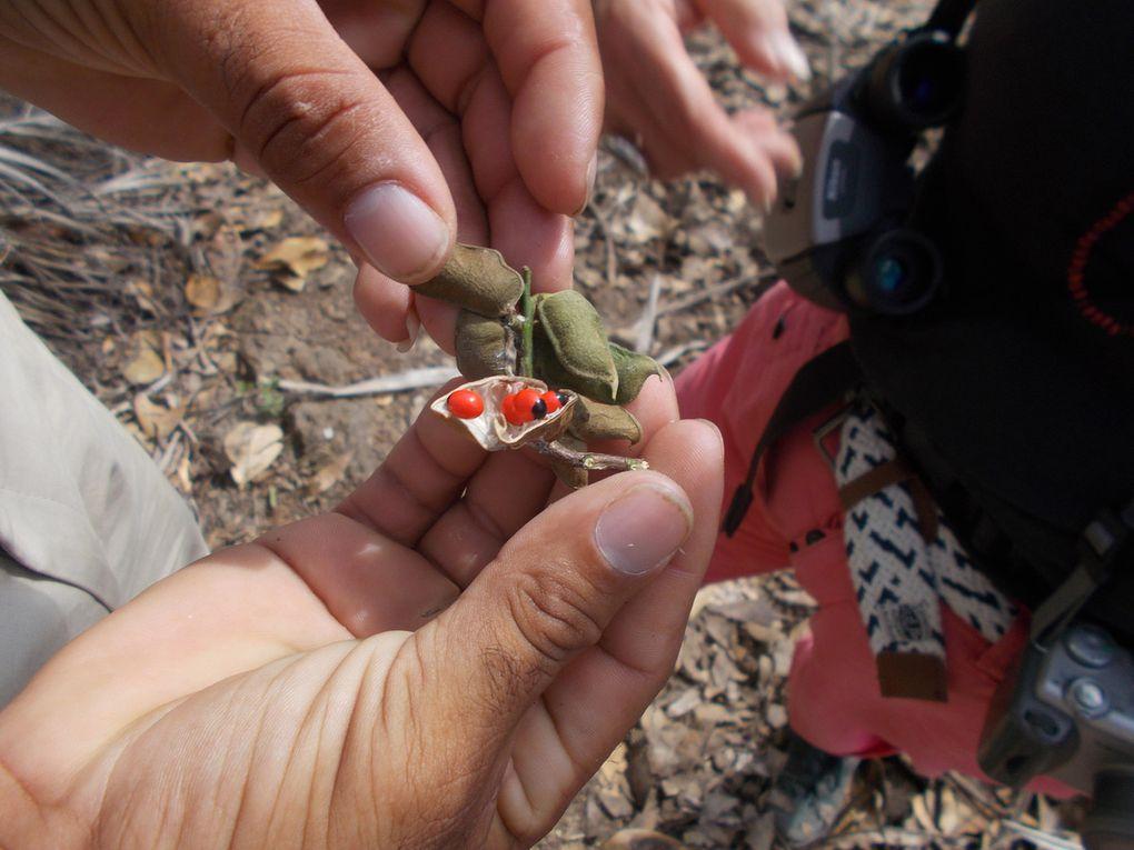 la parc naturel Alejandro Humbolt, le guide doit m envoyer le nom des plantes....baignade au retour a Maguana, les 2 petites baies rouges sont utilisees pour les maracas, l oiseau avec du rouge est le tocororo, oiseau embleme nationale, quand les enfants n avaient pas de cahier ils ecrivaient avec la pointe fournie par un cocotier sur les feuilles vertes les revolutionnaires aussi,  la grenouille est la plus petite du monde, on a pas vu de lamantin dans la baie ou ils se trouvent