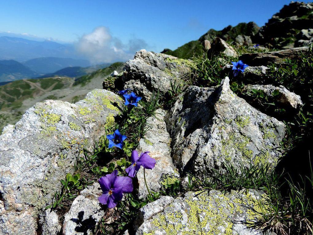 Arrivée au col de la Jasse et le plaisir du casse-croûte au soleil avec une belle vue et entourés de belles fleurs.