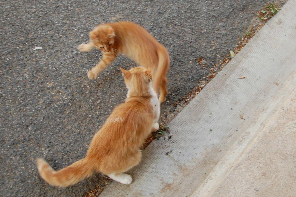 Tranche de vie jeu de chats et hop sauter sur sa mère il adore.