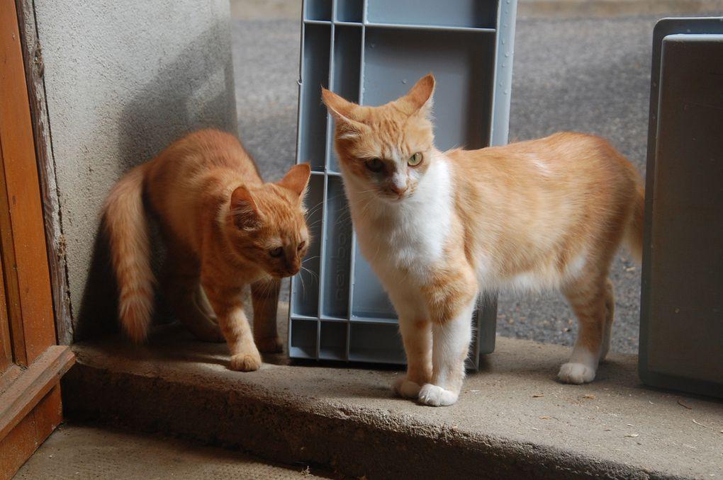 Deux amours chats !