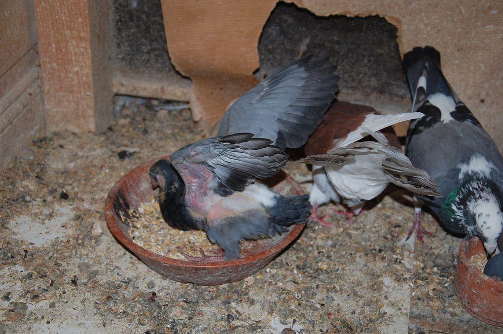 3 photos le petit est en forme les ailes en action.