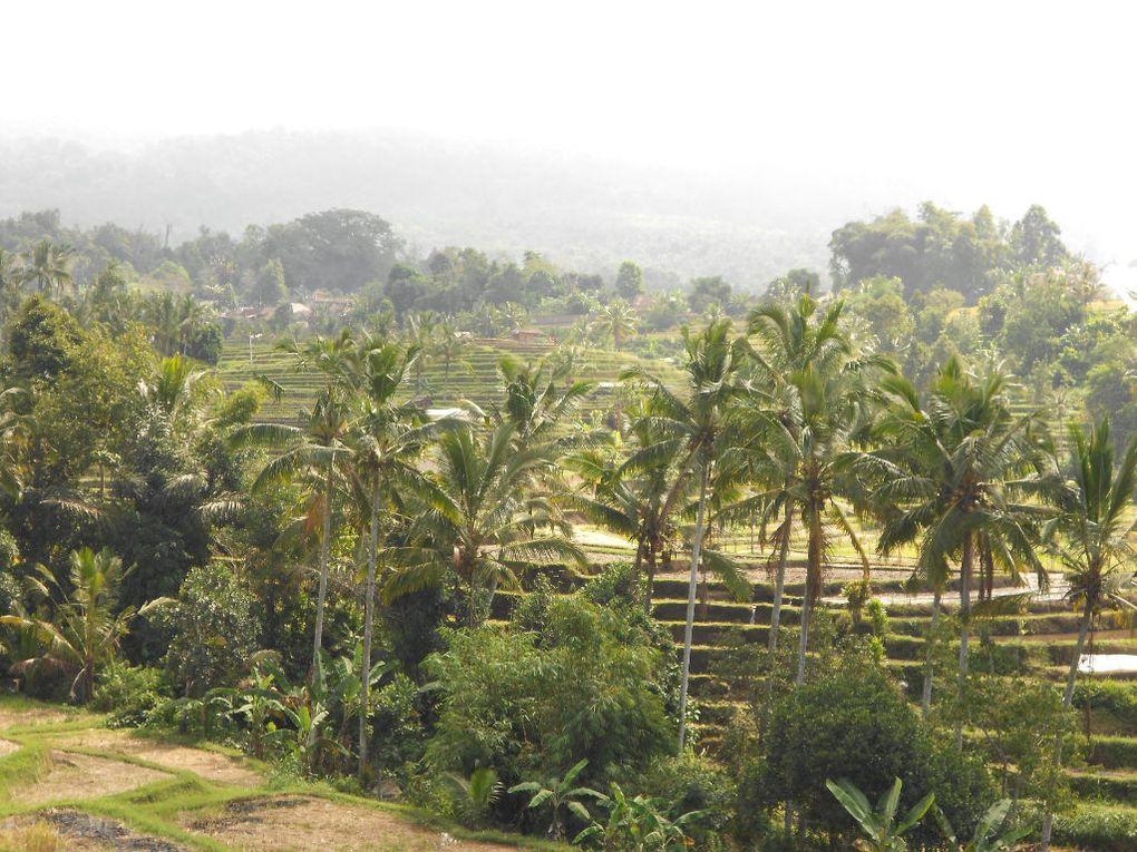 Rizières de Jatiluwih, Bali, été 2015