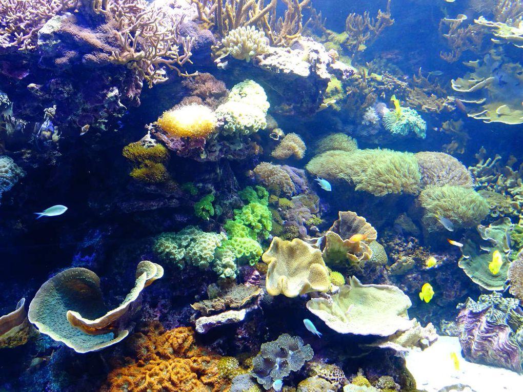 Valencia, centre historique et aquarium, noël 2016