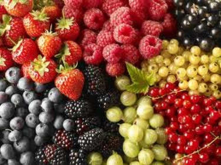 Tag| Nourriture à volonté #été����